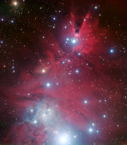 Photo: Christmas Tree Cluster