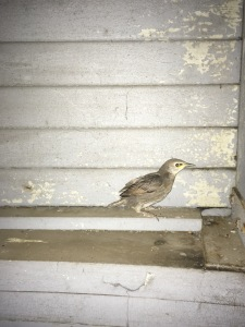 Photo: Baby bird inside observatory.